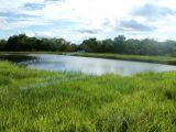 Fazenda à venda no município de Três lagoas  MS