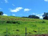 Fazenda 44 alqueires (Lavoura e Pecuária) Entre Apucarana e Califórnia PR