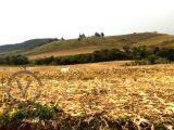 Fazenda 122 alqueires (Plantando 38 abre mais 25) + Pecuária. Kaloré PR