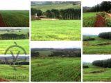 Sítio com 29,5 alqueires paulista (Plantando 24) Grandes Rios - PR