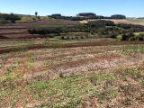 Sitio 11 alqueires paulista (plantando 9) Cambira PR