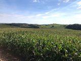 Excelente Fazenda 101 alqueires, plantando 72 + 3 de pastagem - Astorga PR