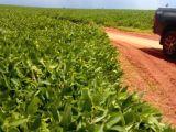 Fazenda entre Sonora e Pedro Gomes
