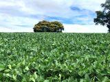 Fazenda em Curiúva 192 alq