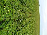 Fazenda a Venda na regão de Primavera do Leste (MATO GROSSO)