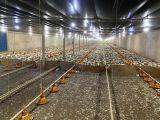 Sítio 4,5 Alqueires Paulista - Terra Roxa com 4 aviários com 11.500 m² - Munhoz de Mello PR